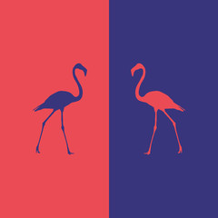illustration flamingo beautiful