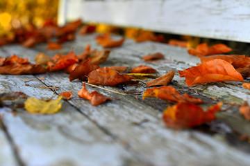 buntes Buchenlaub auf einer alten weißen Holzbank im Garten