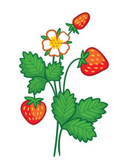 Vector illustration with a wild strawberry on a white background. Picture with a plant.