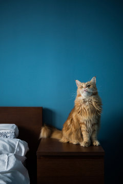 Cat on a bedside
