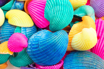 Vibrant Multicolored Seashells Fotoväggar