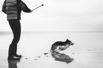 Dog owner playing ball on the beach with his Border Collie at low tide.
