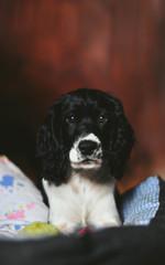 Young dog looking at camera