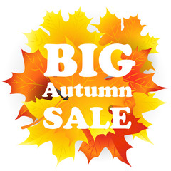 Big Sale banner with bright autumn leaves
