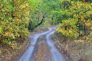 rut road in autumn forest