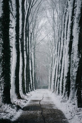 Trail in the Snow