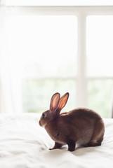 Velveteen bunny