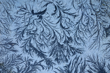 remarkable organic frost patterns