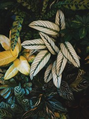 detail of some plants