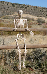 Wild West Halloween Skeleton sitting on wooden fence