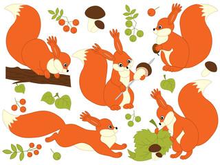 Vector Set of Cute Cartoon Squirrels