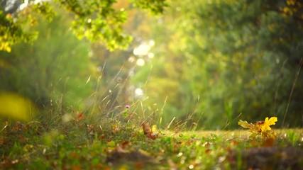 Fototapete - Autumn nature background with grass, trees and sun. Beautiful autumn scene. 3840X2160 4K UHD video footage