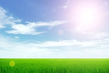 Nature background, Green meadow under the blue sky on sunny day.