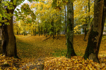 autumn colored trees in the park