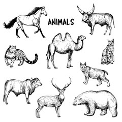 Set of hand drawn sketch style animals. Vector illustration isolated on white background.