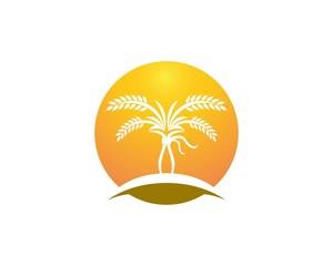 Wheat rice logo design template