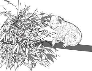black sketch of koala on gum tree