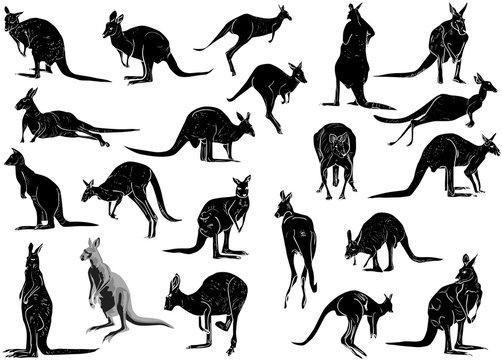 set of twenty one kangaroo isolated on white