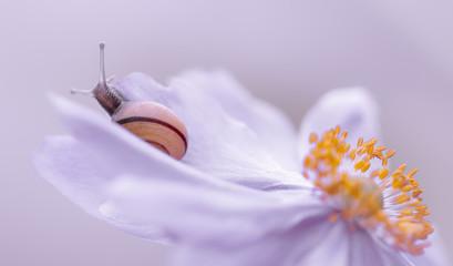 Schnecke auf zarter Blüte