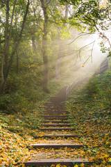 Treppe mit Sonnenstrahlen durch Nebel an einem Herbstmorgen