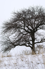Bare tree close-up in winter.