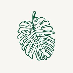 Monstera tropical leaf outline vector illustration