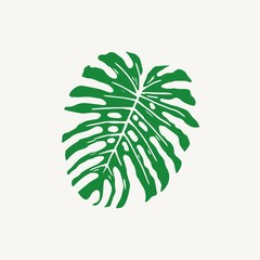 Monstera tropical large rain leaf vector illustration