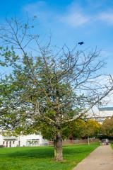 arbre et corbeau