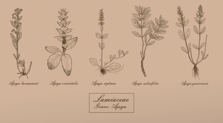 Vector hand drawn collection of herbs botanical illustration