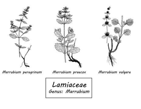 Vector hand drawn set of botanical illustration