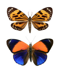 Set butterfly close up