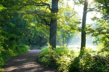 Sonnenstrahlen in einem Walden im Herbst