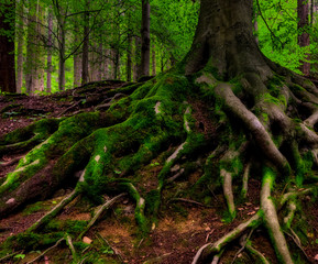 Surreal fairy tale fine art fantasy image of gigantic roots of an old tree, covered with moss and underwood / undergrowth, mysterious forest - fantastic realism in nature
