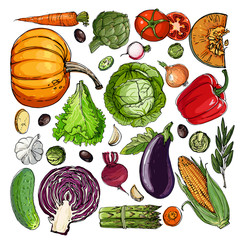 Square of colored vegetables.  Fresh food. Pumpkin, Cabbage, Blockley, kohlrabi, cauliflower, Brussels, beets, asparagus, corn, garlic, tomato line drawn on a white