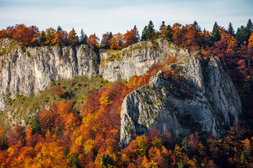 autumn forest on a rocky cliff. gorgeous nature scenery in mountains
