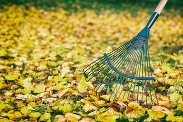 raking leaves in the garden, detail rake