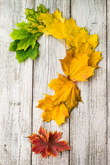 Maple leaves with color gradient on white wooden background arranged in the shape of a question mark