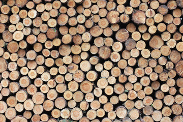 Aluminium Prints Wood Log Background