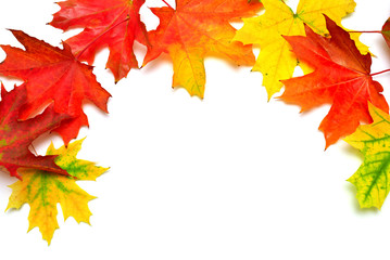 Autumn maple leaves isolated on white background. Falling foliage. Flat lay, top view, creative concept. Frame, space for text