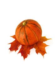 Orange pumpkin on a maple leaf. Isolated on white background.