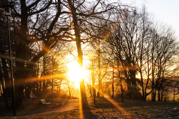 Bright sunny winter sunrise over the city park, a forest in Scandinavia