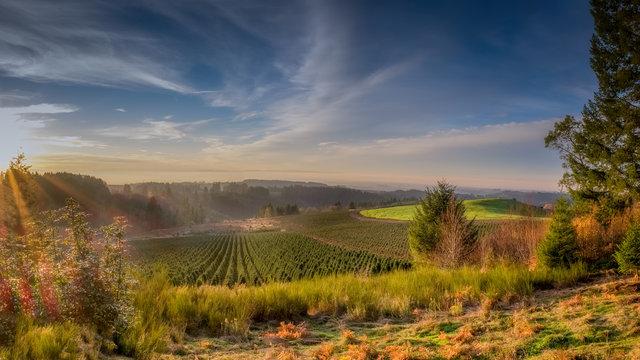 Willamette Valley Vineyards Sunset