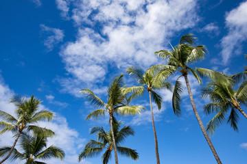 Hawaii island's palm trees and blue sky