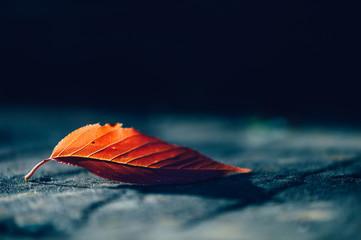 Close up of single autumn leaf Fotobehang