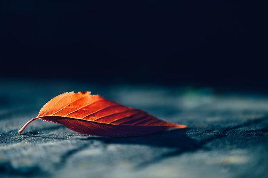 Close up of single autumn leaf