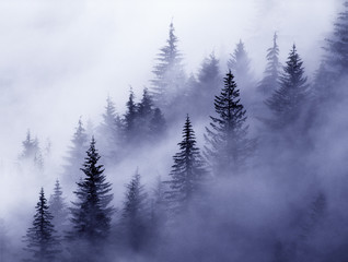 fog foggy stevens canyon mount mt rainier washington cascades evergreens pines