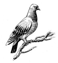 Dove on a tree