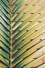 Palm leaf pattern; exotic floral background