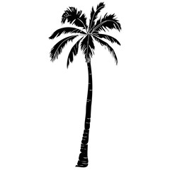 Black vector single palm tree silhouette icon isolated