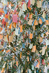 Notes of hope and wishes on a tree